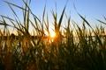 Картинка трава, солнце, природа