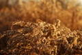 Картинка трава, растение, кусты, природа, растения, макро фото, цветки