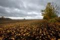 Картинка поле, осень, листья