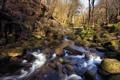 Картинка лес, река, весна, поток, мост, камни