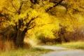 Картинка лес, деревья, осень, арт, рисунок
