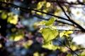 Картинка листья, ветки, природа, фокус, резкость