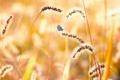 Картинка лето, природа, бабочка