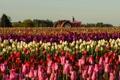 Картинка поле, цветы, трактор, тюльпаны