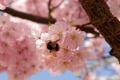 Картинка природа, весна, цветение