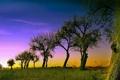 Картинка небо, деревья, пейзаж