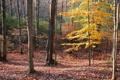 Картинка деревья, лес, осень, листва
