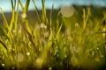 Картинка капли, лето, роса, зелень, травка, цвет, свечение