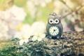 Картинка цветы, природа, сова, часы, ветка