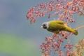 Картинка ягоды, дерево, птица, ветка, желтая