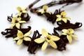 Картинка цветы, обои, белый фон, орхидея, ваниль, ванильные палочки