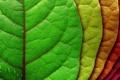 Картинка листья, капли, красный, жизнь, зеленый