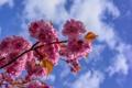 Картинка небо, облака, цветы, ветка, весна, лепестки, сад
