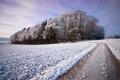 Картинка зима, дорога, снег, деревья, пейзаж, красота