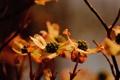 Картинка macro, dogwoods in the waning light, природа, цветы