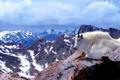 Картинка шерсть, Колорадо, рога, США, горный козел, гора Эванс