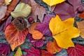 Картинка листья, autumn, leaves, colorful, осенние, дерево