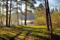 Картинка лес, лето, пейзаж