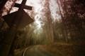 Картинка лес, пейзаж, дорога