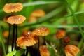 Картинка трава, макро, грибы, фокус, боке