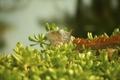 Картинка игуана, обои, трава