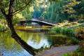 Картинка деревья, мост, пруд, парк, камыши, фонтан
