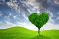 Картинка весна, heart, love, луг, field, поле, дерево