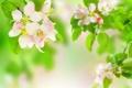 Картинка листья, цветы, ветки