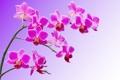Картинка макро, ветка, лепестки, орхидея