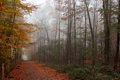 Картинка деревья, туман, листва, Осень, заборчик