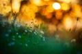 Картинка трава, макро, свет, природа