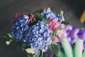 Картинка цветы, лепестки, голубые