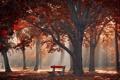 Картинка осень, город, парк
