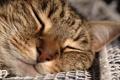 Картинка кот, спит, улыбка