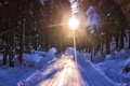 Картинка дорога, солнце, свет, снег, деревья, Зима