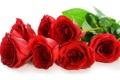 Картинка красные розы, розы, лепестки, цветы
