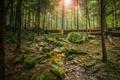 Картинка лес, солнце, деревья, природа