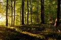 Картинка закат, лес, панорама, деревья, свет, лучи