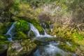 Картинка мох, ручей, кусты, водопад, лес, камни