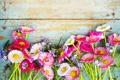 Картинка цветы, ромашки, полевые цветы, маргаритки