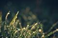 Картинка капли, трава, вода, боке