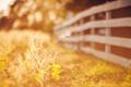 Картинка осень, трава, солнце, забор, боке, листья, ограда