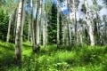 Картинка зелень, лес, лето, трава, деревья
