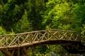 Картинка лес, деревья, мост