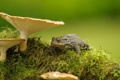 Картинка природа, грибы, лягушка
