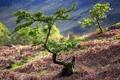 Картинка лето, природа, дерево
