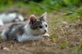 Картинка трава, котенок, мордочка, охота
