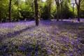 Картинка лето, деревья, цветы, парк