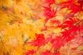 Картинка желтые, листья, веточки, осень, природа