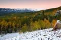 Картинка лес, деревья, природа, горы, снег, вершины
